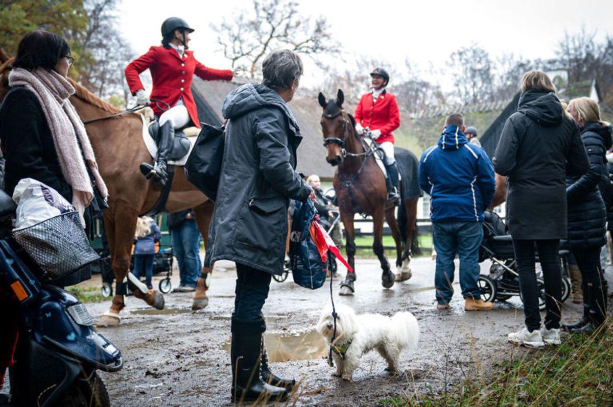 """Rytterne ankommer til Hubertusjagten 2019 i Dyrehaven ved Klampenborg, søndag den 3. november 2019. Hubertusjagten er en symbolsk videreførelse af de gamle parforce-jagter, som Dyrehaven oprindeligt er anlagt til. Her lod man hunde støve ræven op, og feltet fulgte hunde og ræv. I dag er der ingen jagthunde, og ræven er erstattet af to """"forlorne"""" ræve i form af to erfarne ryttere, som rider forrest med rævehaler på deres røde ridejakker. Jagten er ca. 11 km lang og tager 1½ time.. (Foto: Niels Christian Vilmann/Ritzau Scanpix)"""