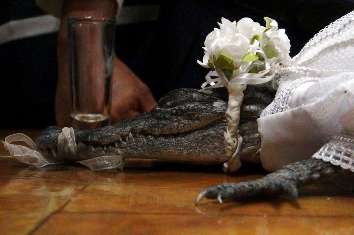 Borgmester i San Pedro Huamelula i Mexico, Victor Aguilar, blev fredag gift med en krokodille. Foto: Rusvel Rasgado/Scanpix.