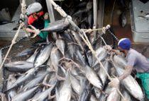 Vil give lystfiskere kæmpe fangst